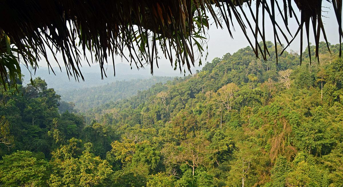 Uitzicht op jungle vanuit boomhut bij de gibbon expierence.