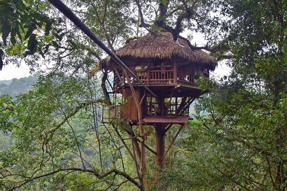 Boomhut van de gibbon experience in de jungle.