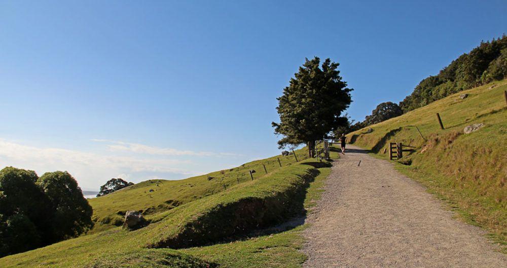 hardloper op stijgend pad bij Tauranga, Nieuw-Zeeland.