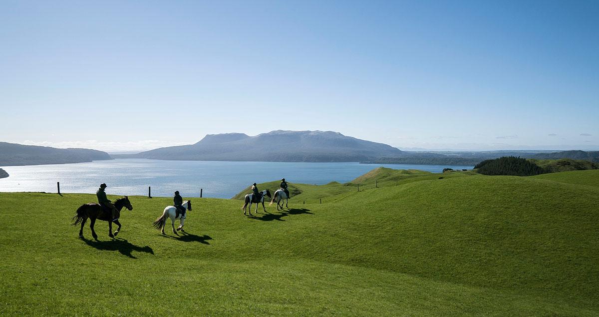 Paardrijders op groene vlakte bij Rotorua, Nieuw-Zeeland