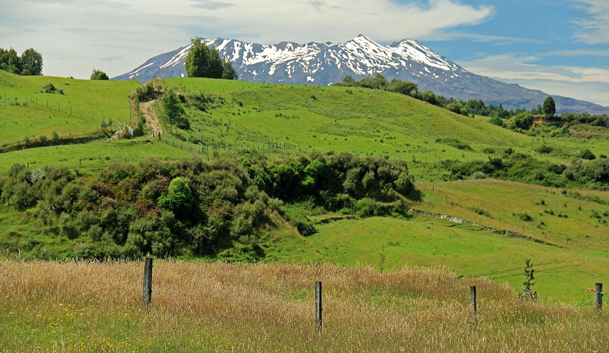Groene bergweiden en besneeuwde bergtop bij Tongariro NP, Nieuw-Zeeland.