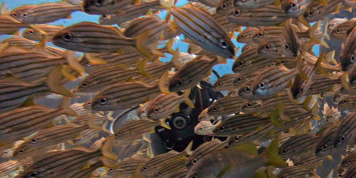 duiken tussen de vele vissen bij de zoutpier op Bonaire
