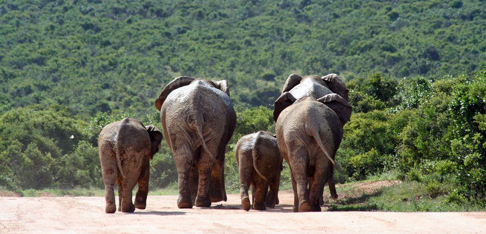 Addo Elephant National Park, Port Elizabeth, South Africa