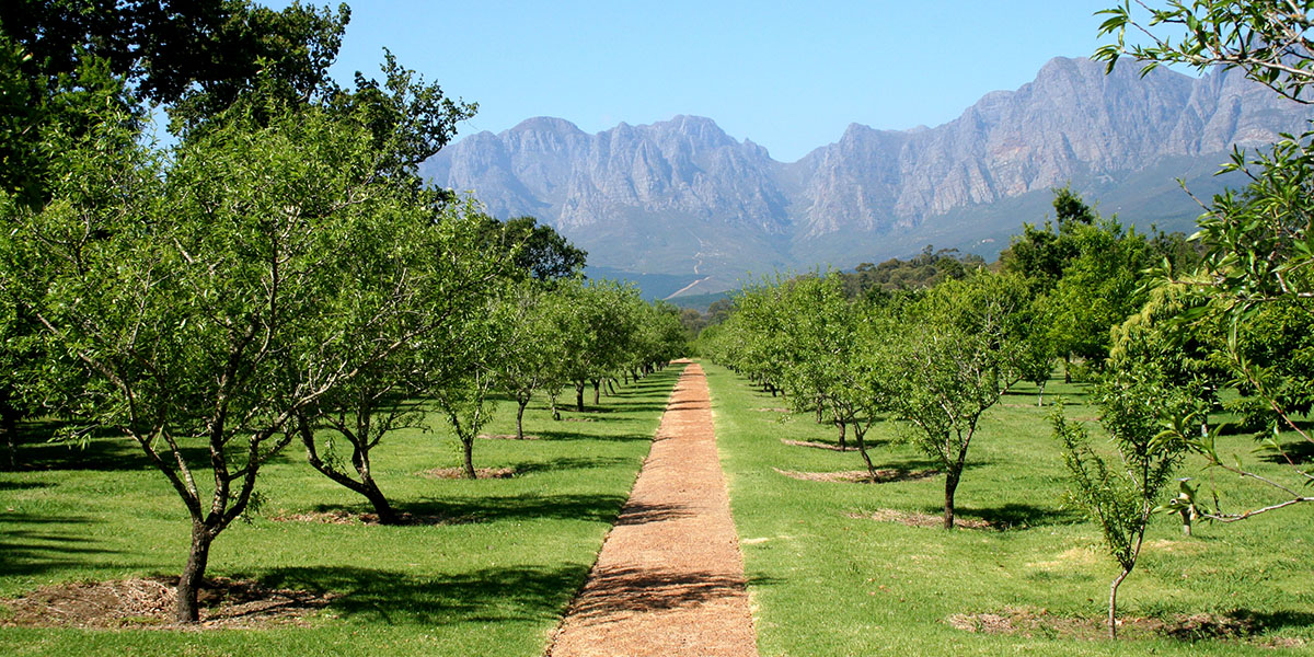 wijngaard bij Stellenbosch