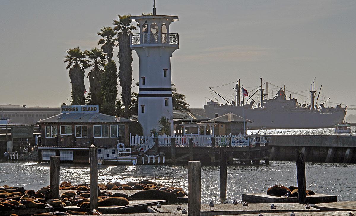 Zeerobben bij Fisherman's Wharf
