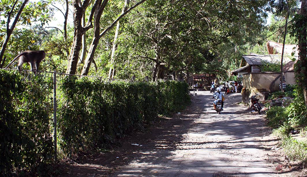 Aap op hek naast weg bij het monkey forest.