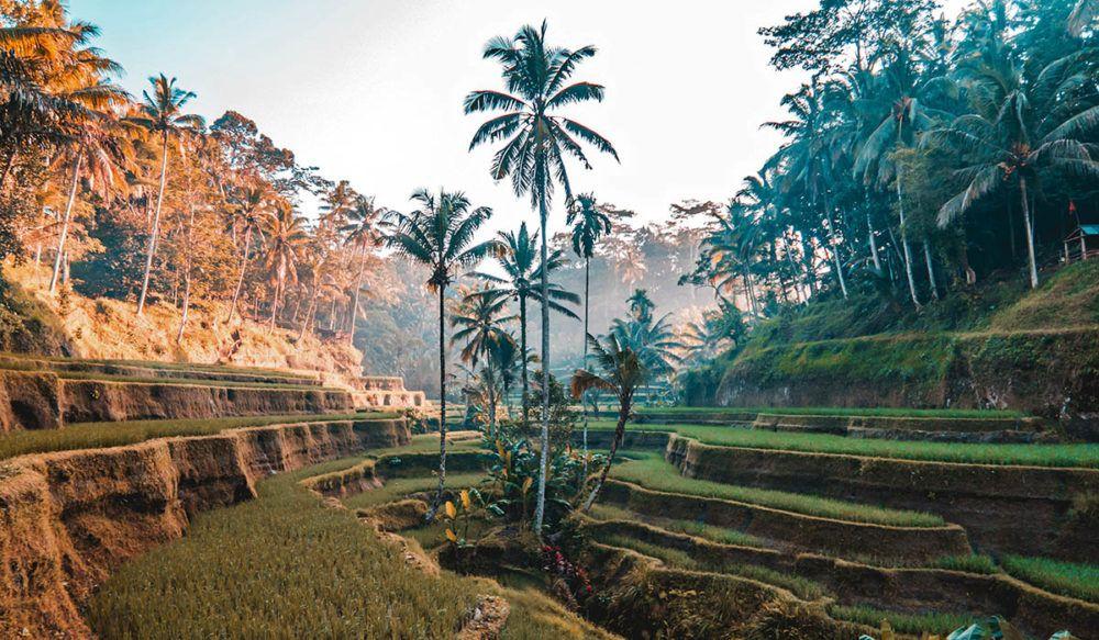 Rijstveld op Bali, Indonesië