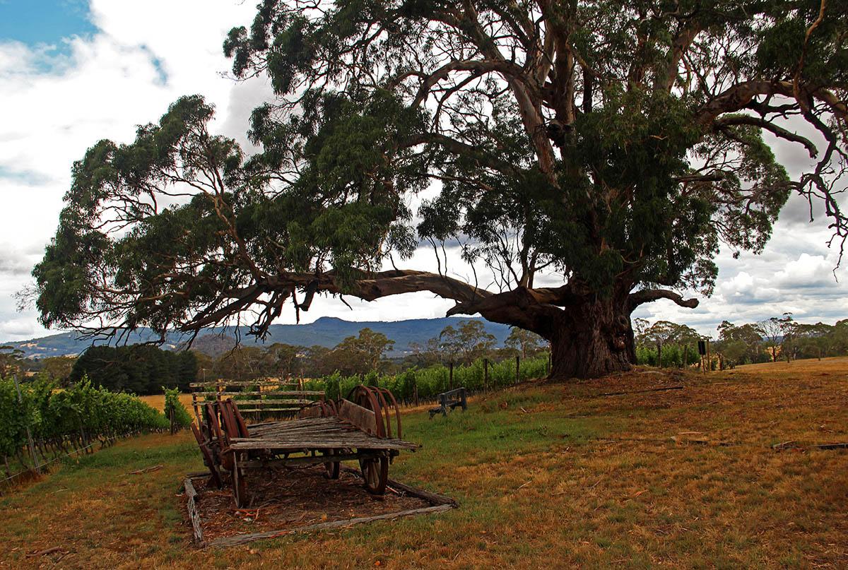 Wijngaard met picknicktafel bij de Great Ocean Road
