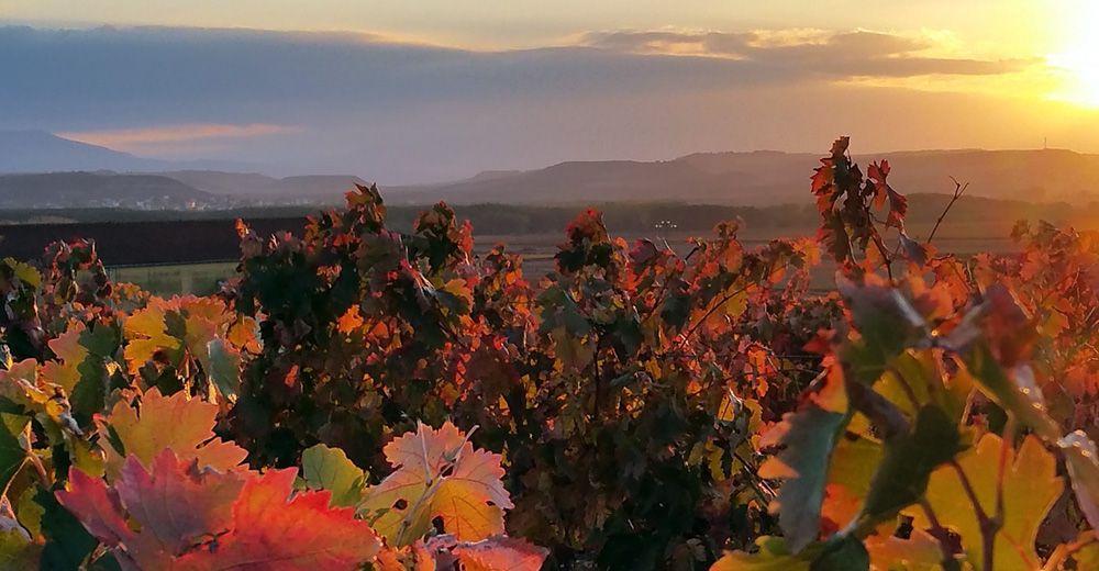 Omgeving van La Rioja, Spaans Baskenland