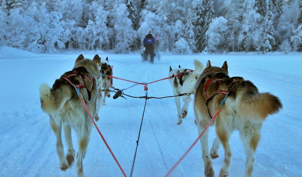 Hondenslee in Fins Lapland