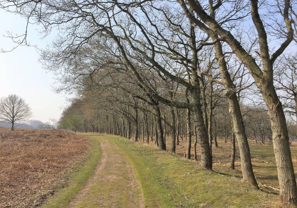 Bij een wandeling door de waterleidingduinen passeer je af en toe een bosgebied