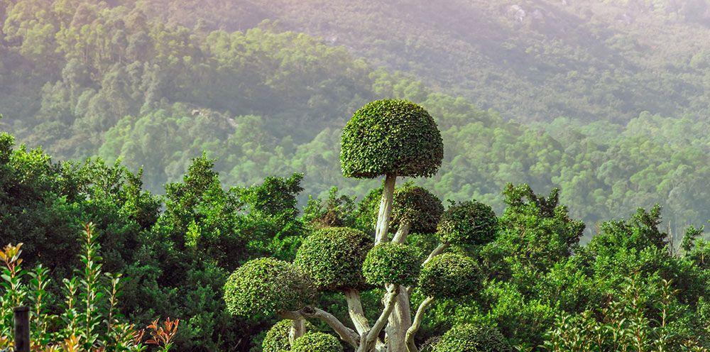 Oerwoud bij Krabi, Thailand