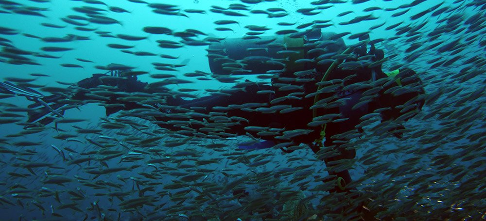 Veel vis bij de Similan eilanden, Thailand