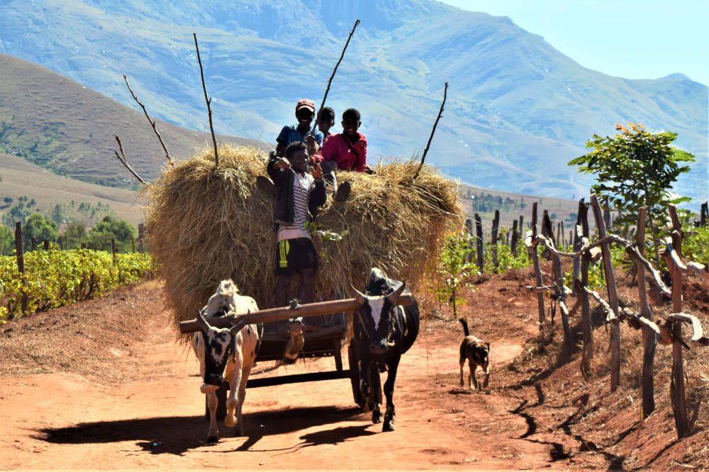 Boerenkar met hooi in Madagaskar