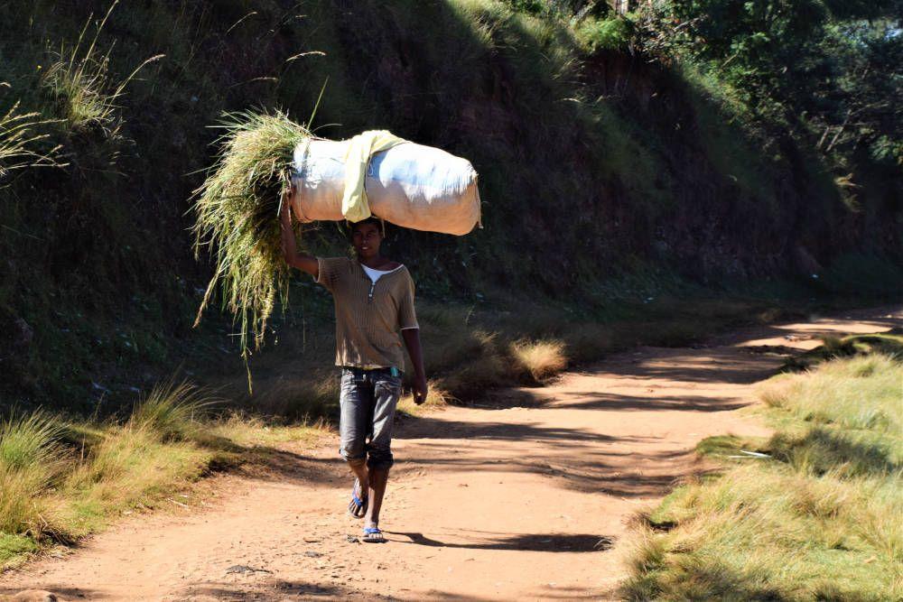 Kind met riet in Madagaskar