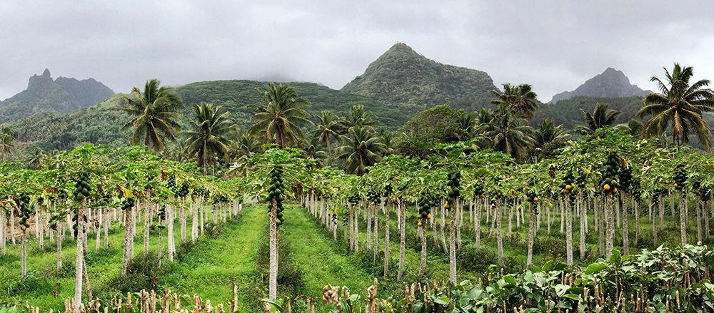 Binnenland van Rarotonga, Cookeilanden
