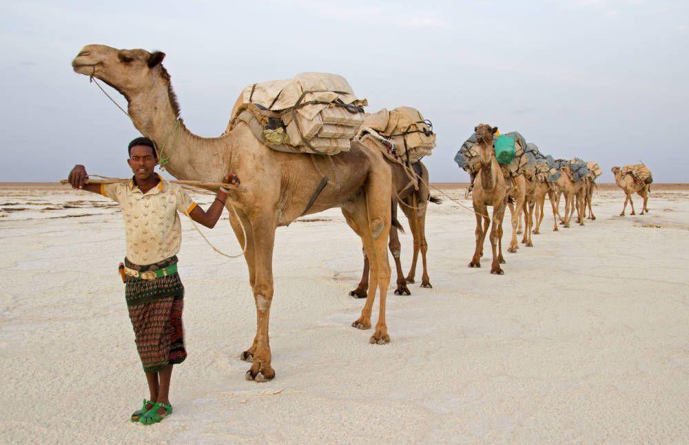 Kamelenkaravaan bij Danakil, Ethiopië
