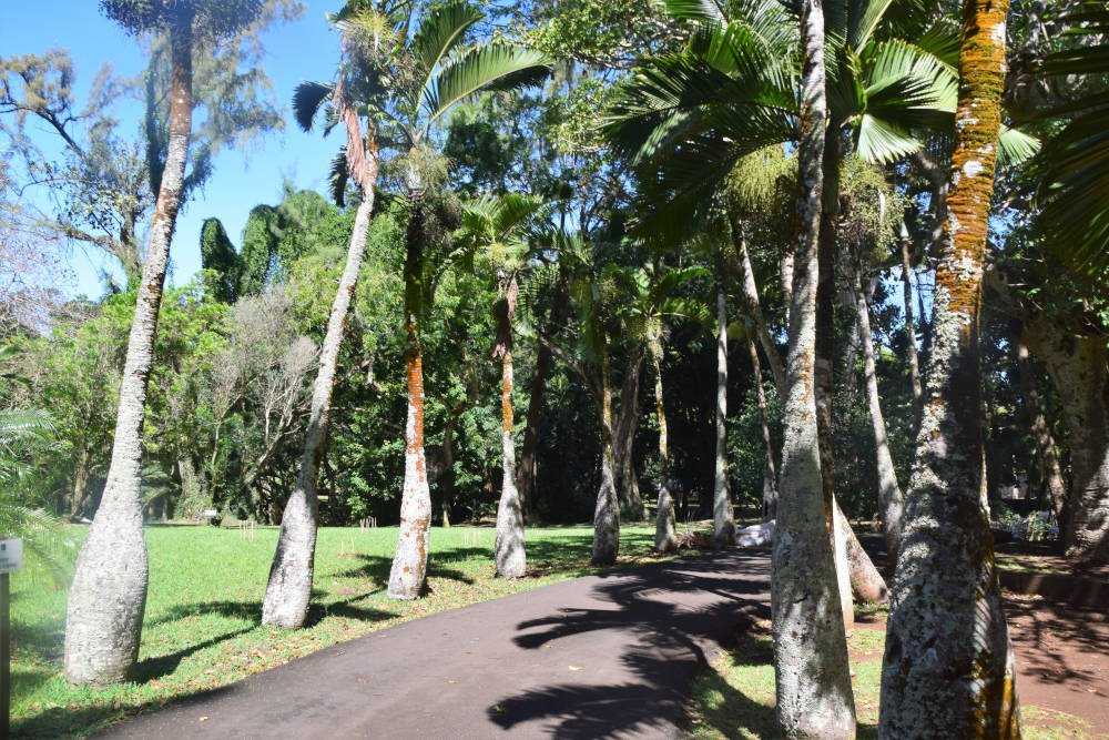 Pamplemousses Garden, Mauritius