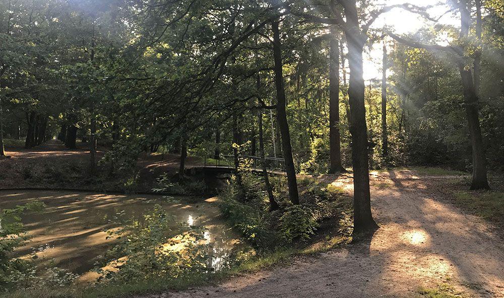 Vijver in het Zeister Bos