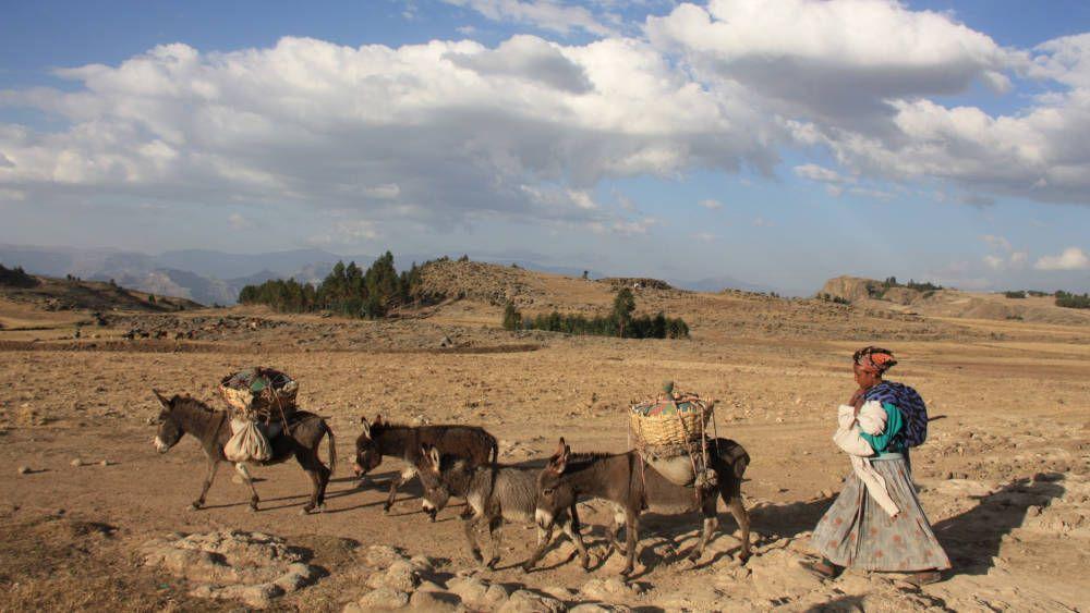 Herdersvrouw met ezels bij Lalibela, Ethiopië