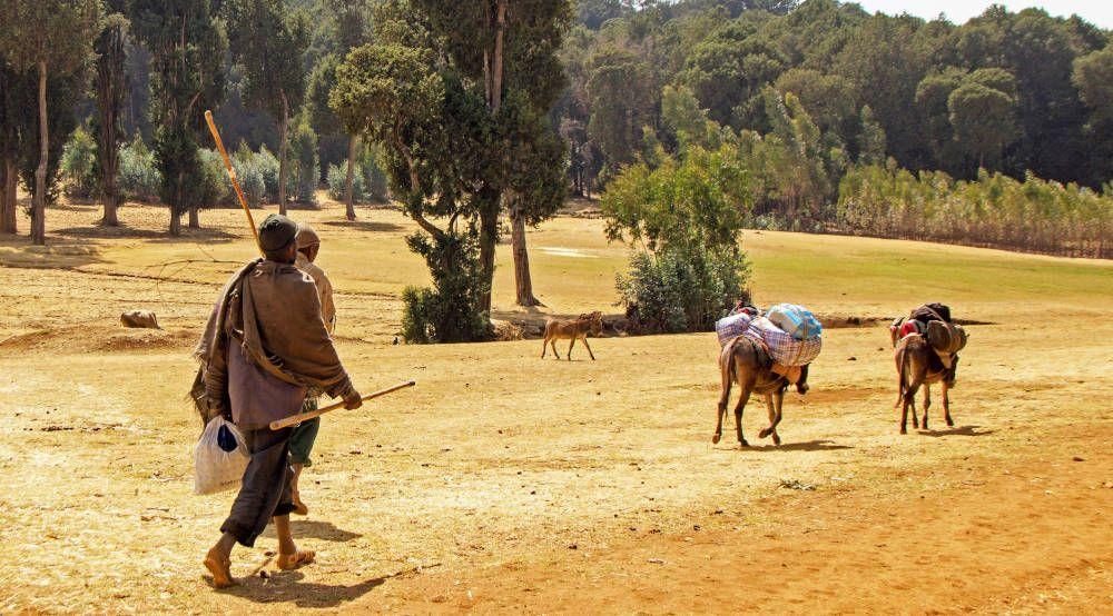 Mannen met ezels bij Lalibela, Ethiopië