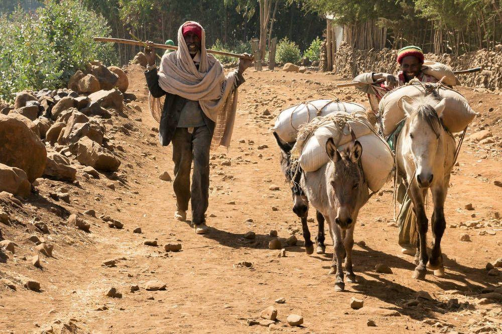 Man met ezels bij Lalibela in Ethiopië