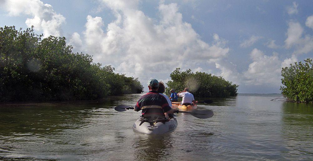 kajakken door de mangroven