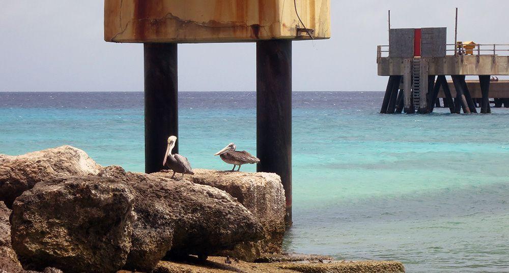 zoutpier op Bonaire