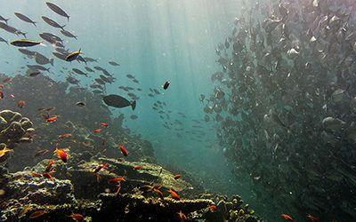 Sipadan: het duikmekka van Maleisië
