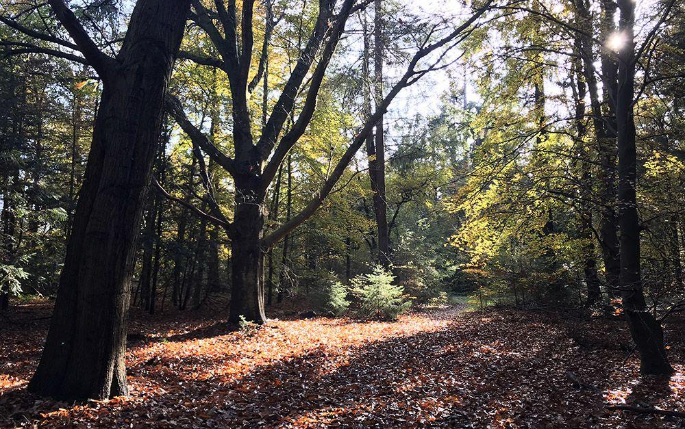 Wandeling door Beerschoten en het Panbos bij Zeist