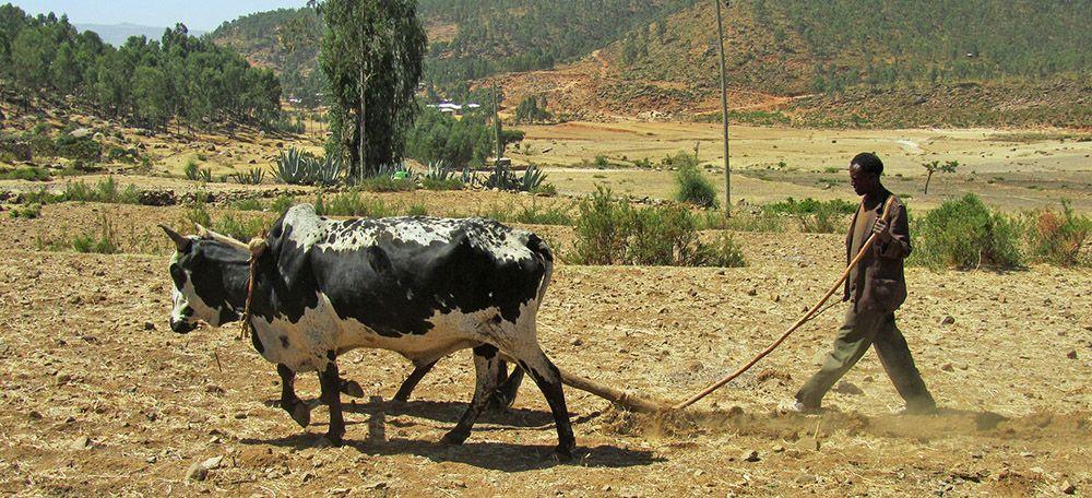 boer met ploeg in Ethiopië