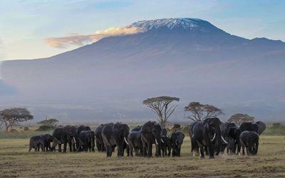 Oost-Afrika