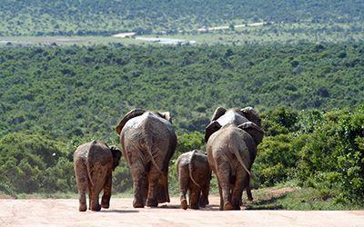 Zuidelijk Afrika