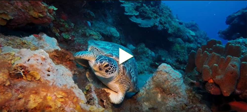 Video van de onderwaterwereld van Saba