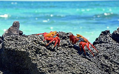 Bijzondere diersoorten op de Galapagos eilanden