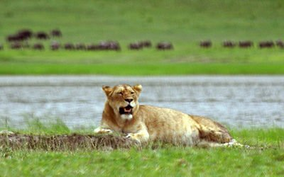 Top 5 parken voor een safari in Tanzania
