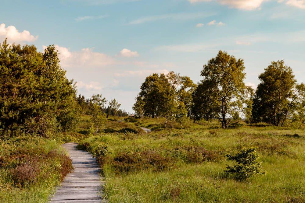 Weide- en boslandschap in België