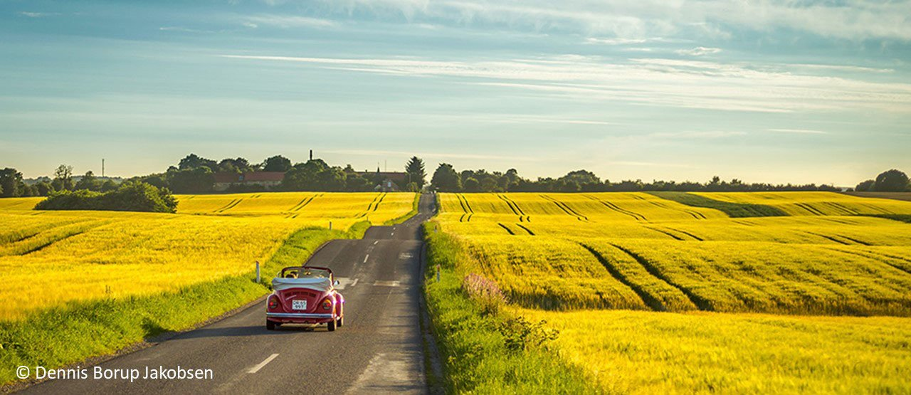 Gele velden in Denemarken