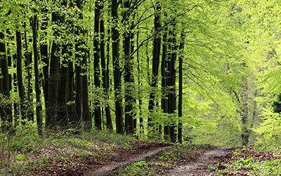 Wandelen in het Sauerland