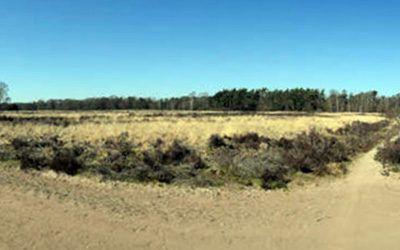 Wandeling bij Ermelo door bos- en heidegebieden