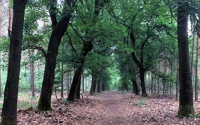 De Loenense bossen: een heerlijk wandelgebied