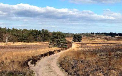 Wandeling bij Vierhouten en de Elspeetse Heide