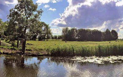 Wandeling rondom Woerden door de veenweiden