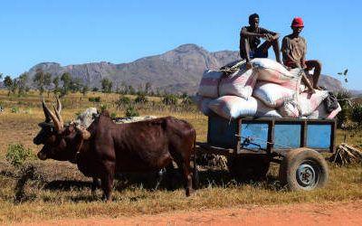 Stammen bezoeken in de omgeving van Ambalavao