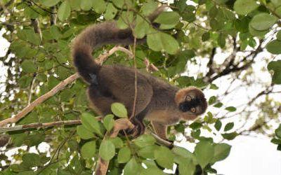 National Park Ranomafana, het tropische regenwoud