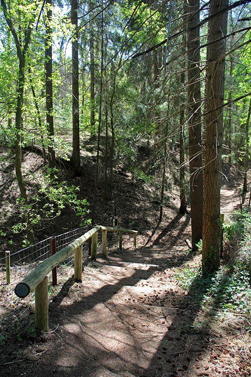 trap in het bos