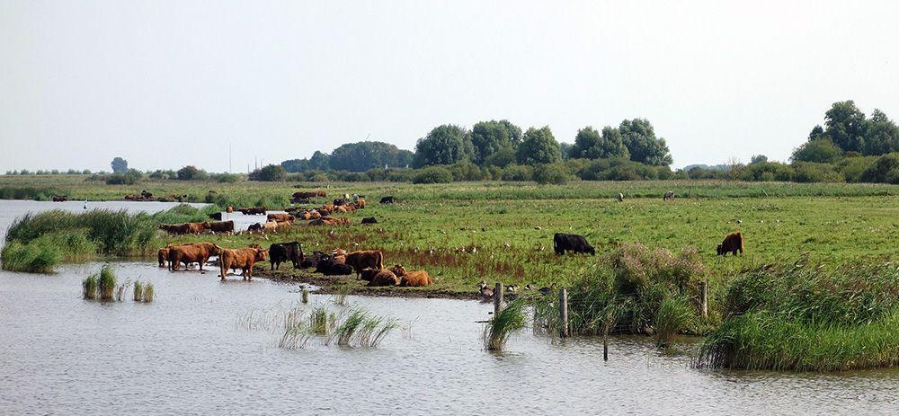 Lauwersmeer, Friesland