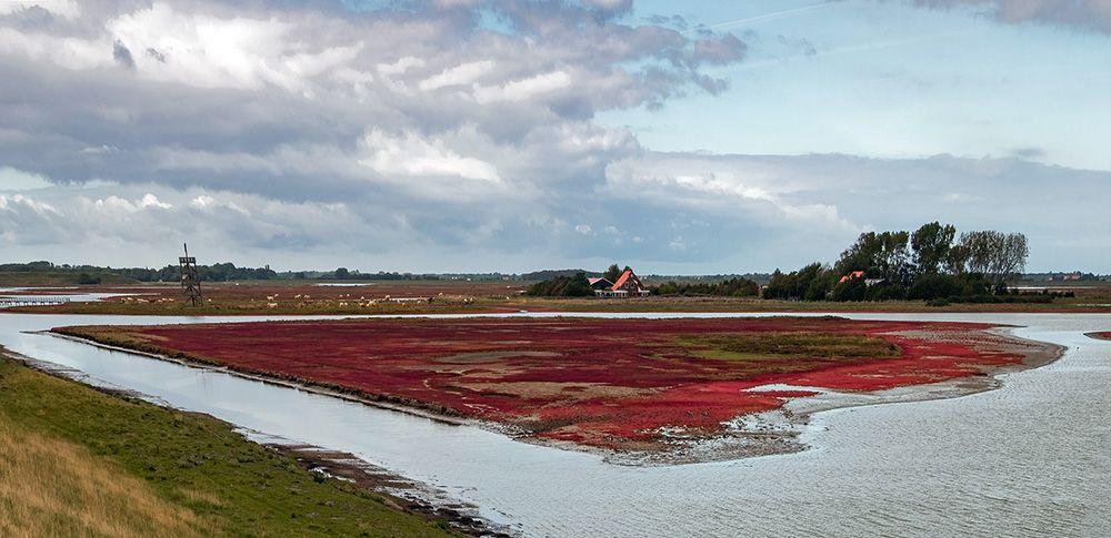 Schelphoek in Zeeland