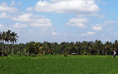 Met een eBike door de rijstvelden bij Ubud