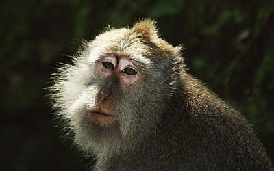 Monkey Forest bij Ubud
